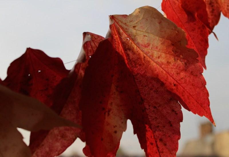 Berlin Reisekraniche Herbst rote Blätter