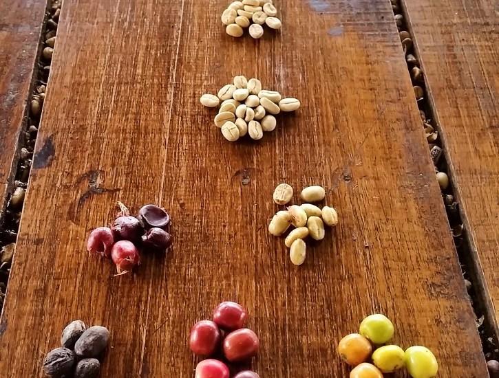 Die einzelnen Phasen der Kaffeebohnen