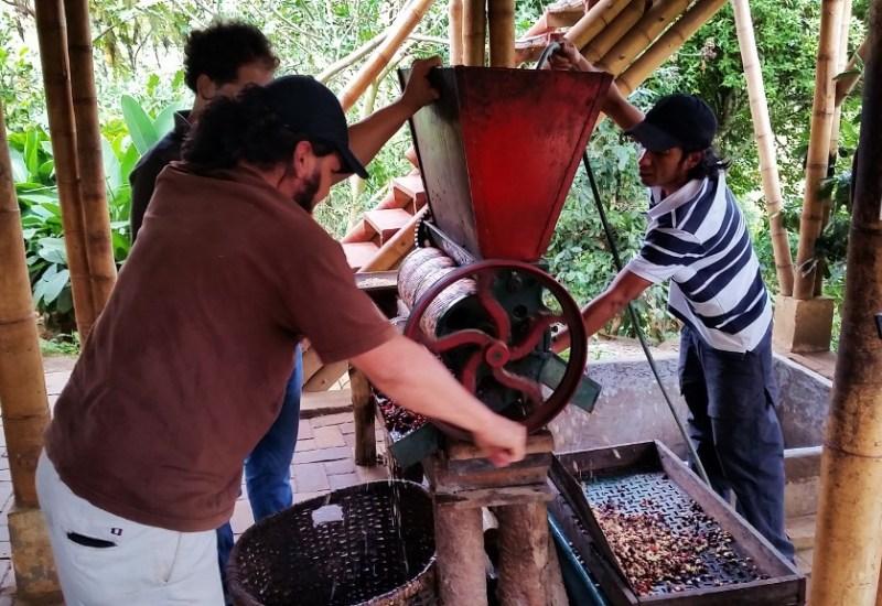 Kaffeekirschen werden gepresst