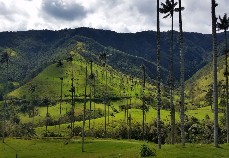 52 – valle de cocora_kolumbien (1024×576)