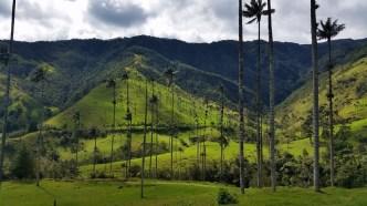 52 - valle de cocora_kolumbien (1024x576)