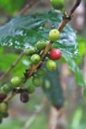 53 - kaffeetour_salento_kolumbien (683x1024)