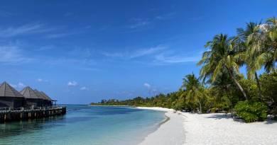 Malediven Strand Palmen