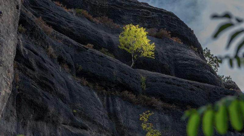 Schweiz Baum im Felsen