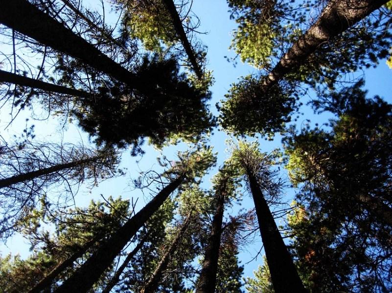 Baumgeschichten