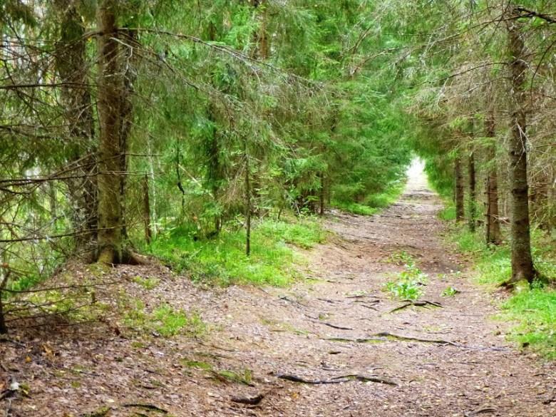 Wie einem deutschen Grimm-Märchen entnommen: Der estnische Wald wirkt wie die ursprüngliche Variante deutscher Wälder mit einem Schuss Schweden.