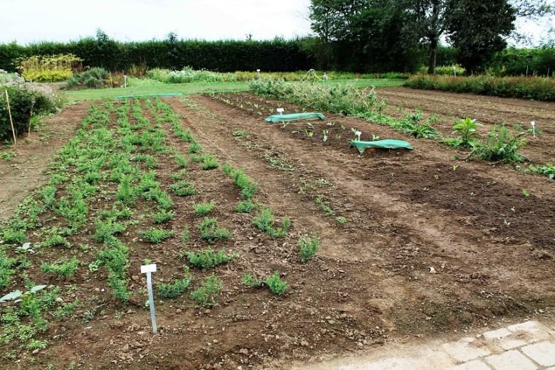Überraschend kleine Heilpflanzenfelder im Garten von WELEDA