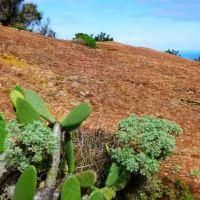 Welche Kanarische Insel ist für uns geeignet
