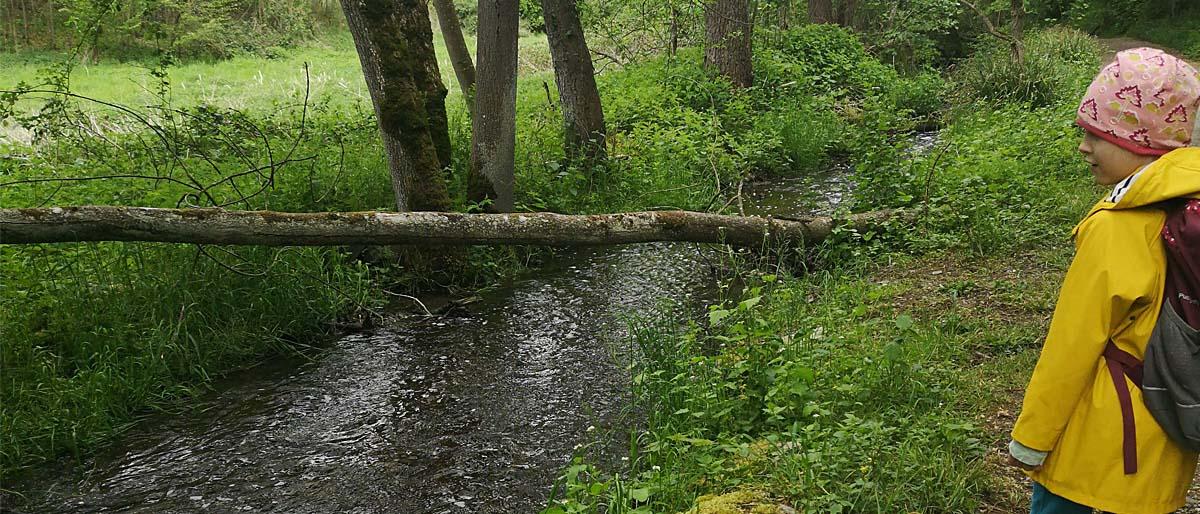 Rothenacker Wald