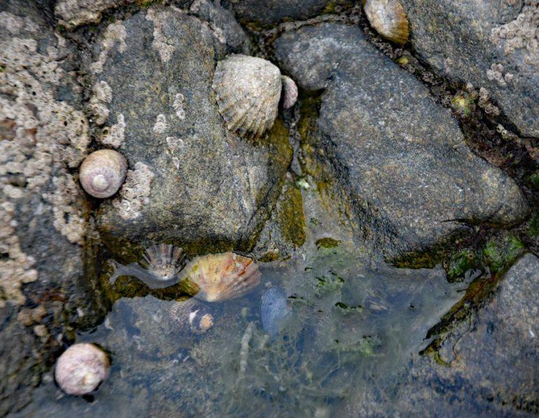 Rock-Pooling