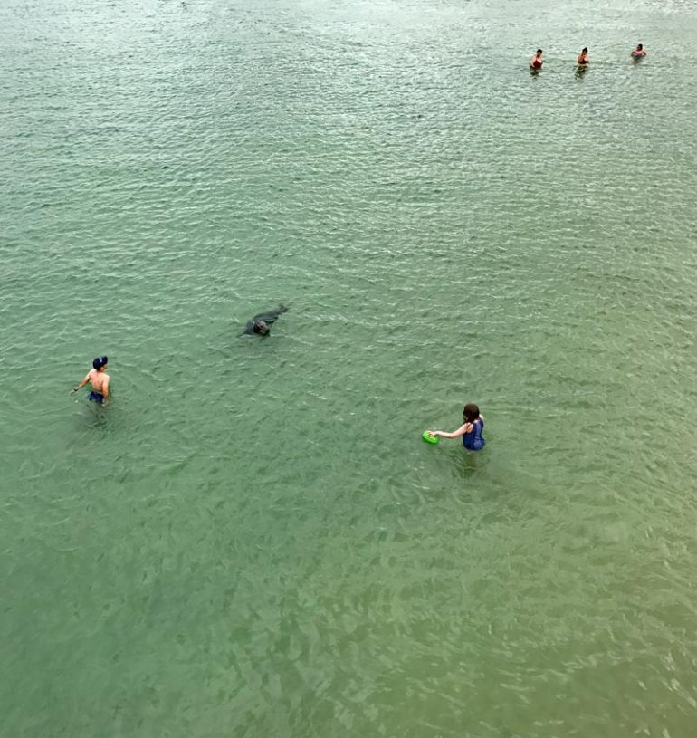 Robben im Hafenbecken St. Ives