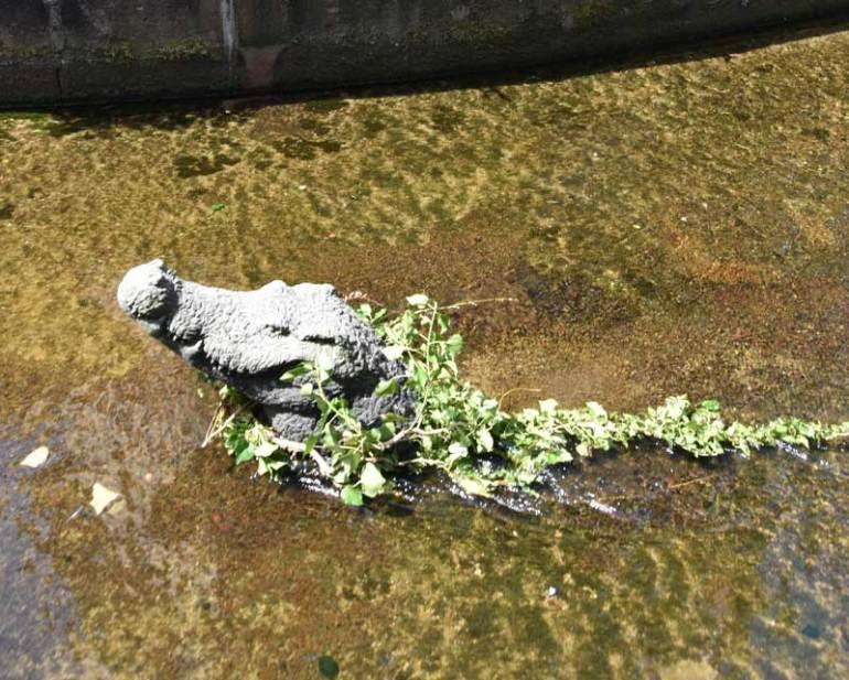 stolzes Krokodil in Freiburg