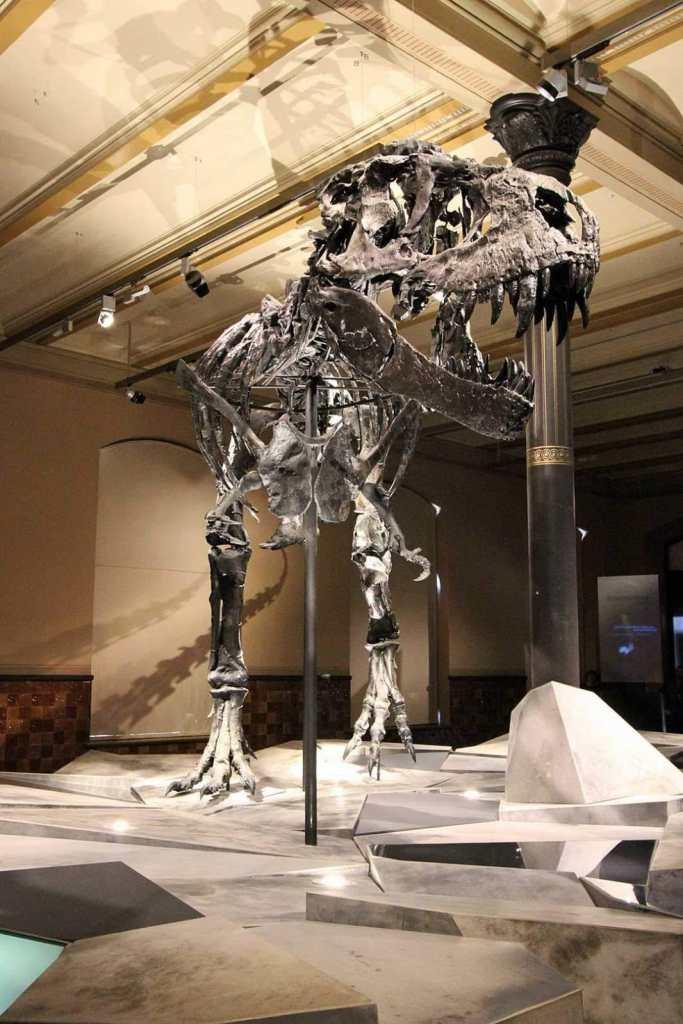 Dino im Naturkundemuseum