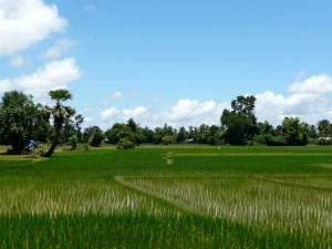 Reisfelder auf Don Khon
