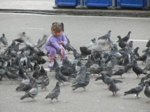 Viele Tauben