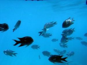 Fische Fische Fische