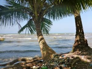 Palmen und Müll