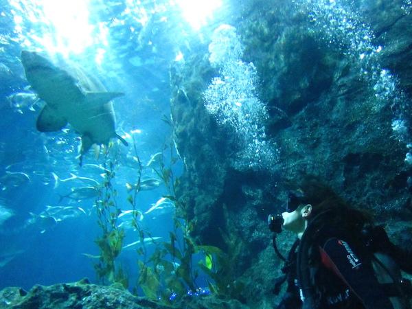 Dykking med hai i Thailand, Bangkokg
