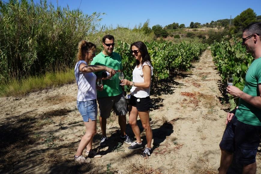 segway_økologisk_vingård_barcelona-9