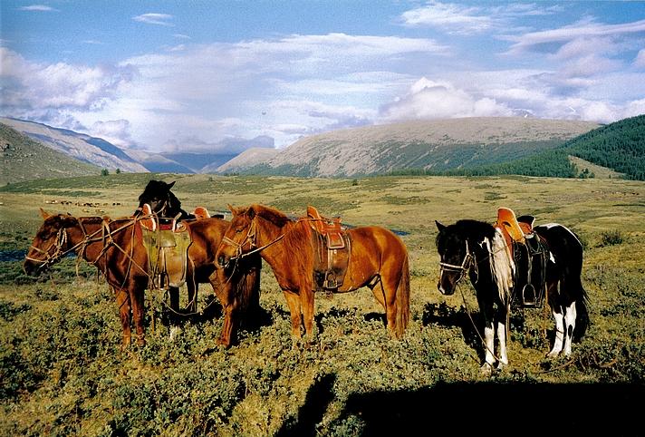 Home Reisetipps Mongolei