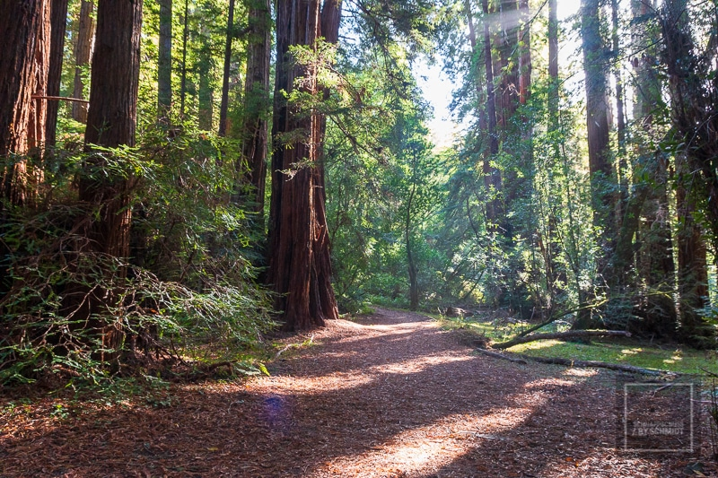 In den Muir Woods