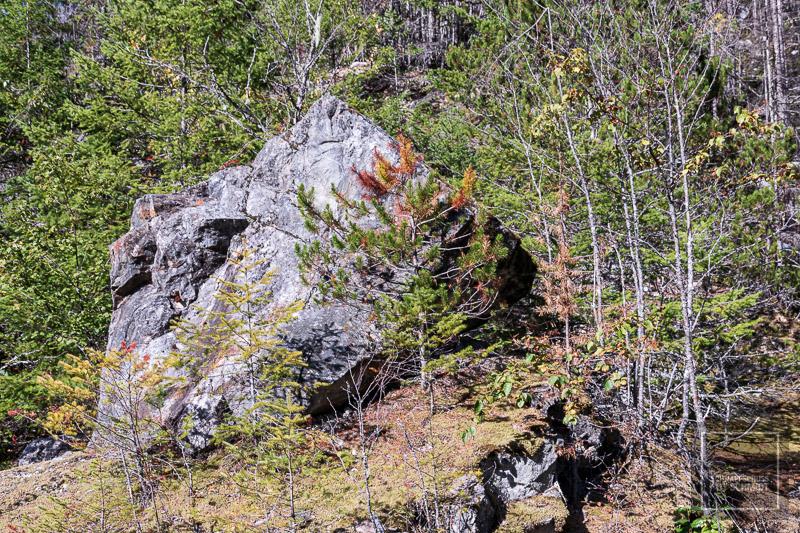 North Cascades National Park - Felsen