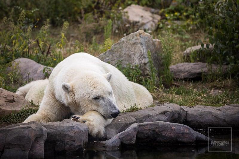 Zoom Erlebniswelt Eisbär 2