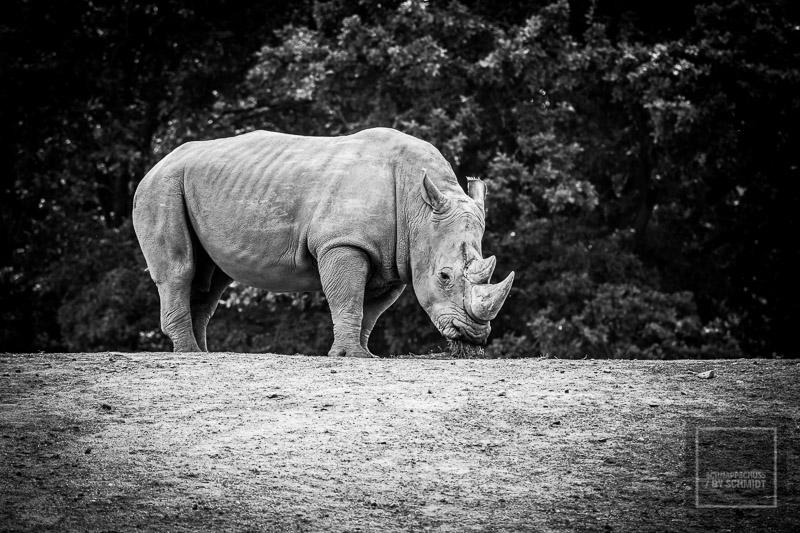 Zoom Erlebniswelt Nashorn