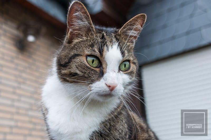 Tierfotografie - Katze