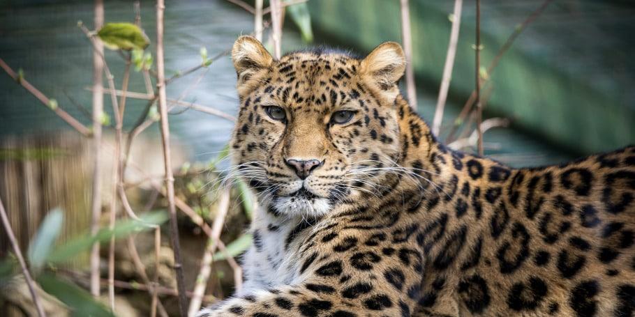 Zoos und Tierparks Cover