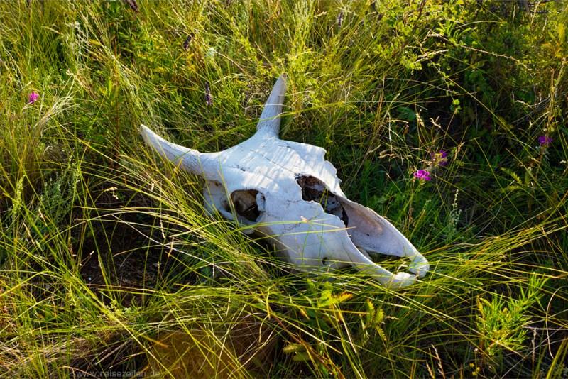 Reisetipps Bilder Mongolei Tierschädel