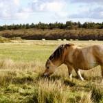 Natur & Nordsee pur – Tipps für einen Tag auf Texel