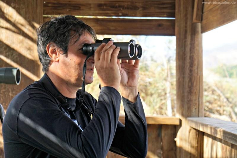 Israel Vogelbeobachtung Eilat Noam Weiss