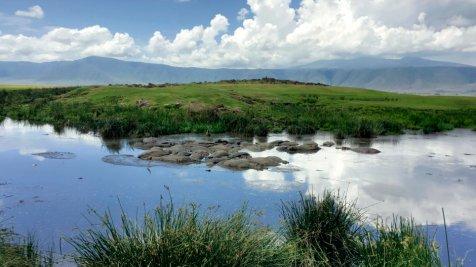 Ngorongoro_Krater_Hippo_Pool