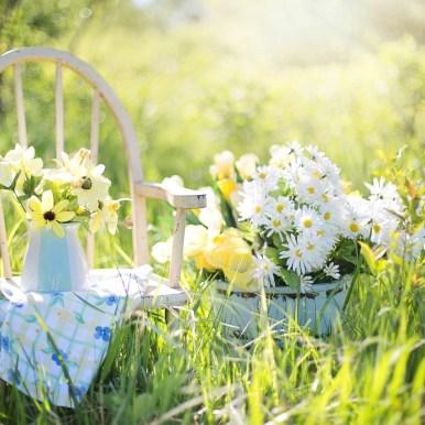 Sommer im Garten