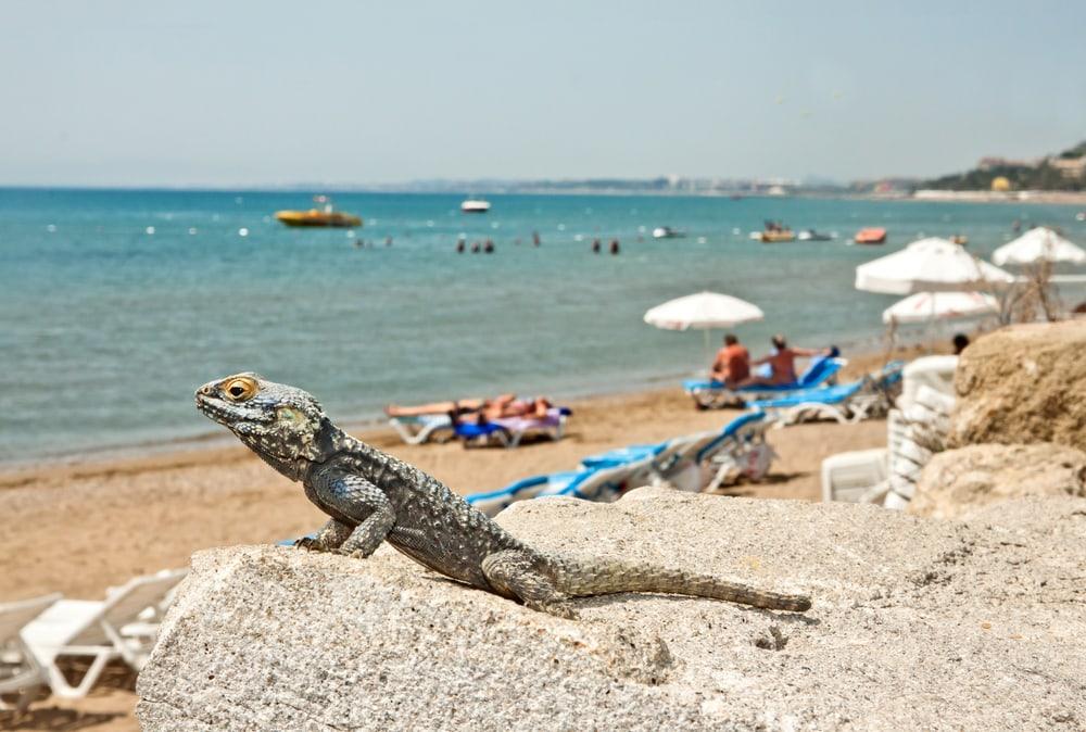 Strand i Side i Tyrkiet. Håber ikke der er for mange øgler ...