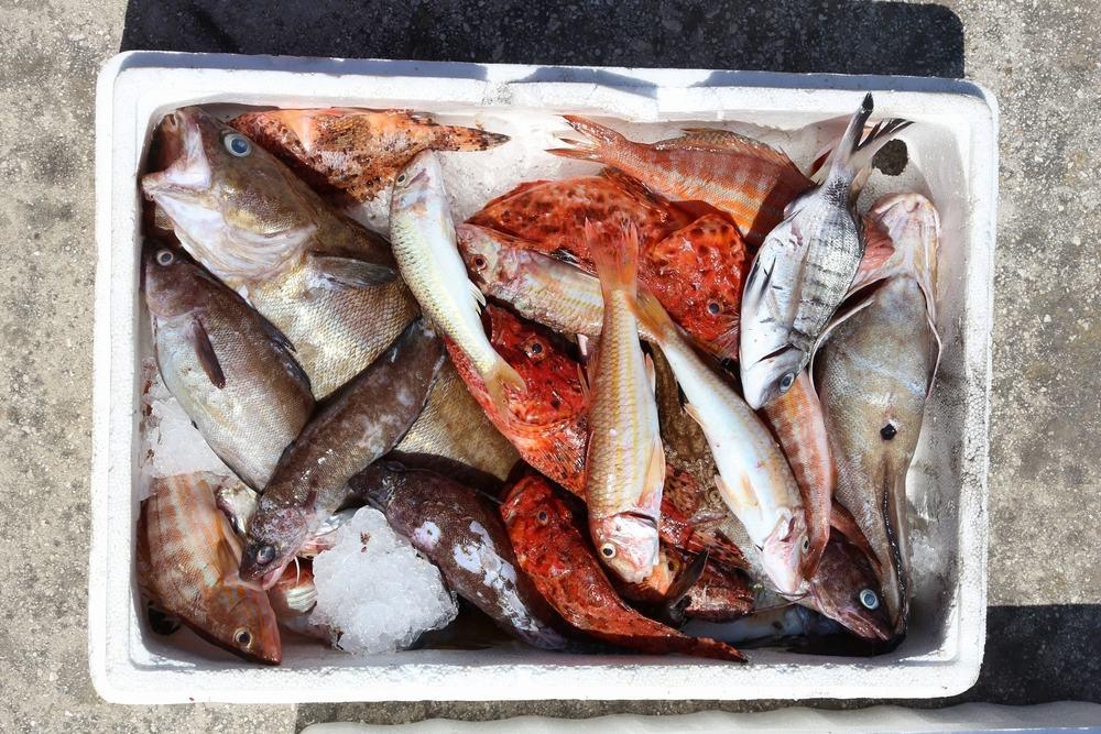 Frisk fisk - Korfu i Grænkenland