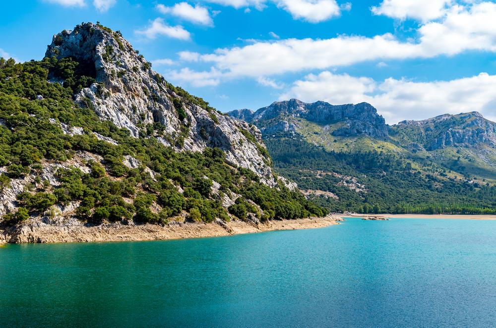 Panta de gorg blau - Mallorca i Spanien