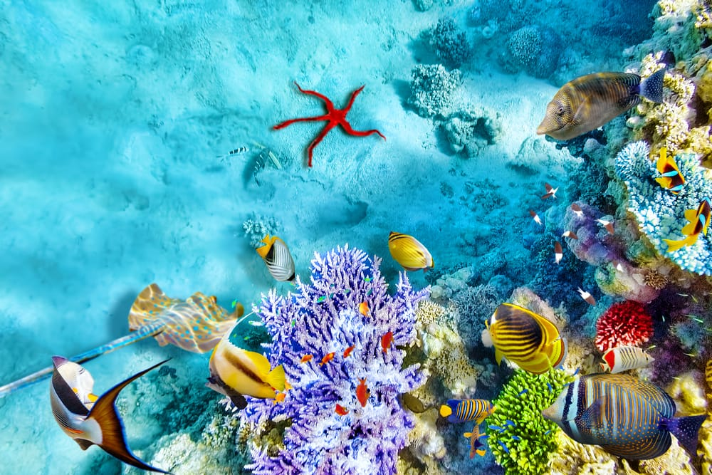 Koraller og tropiske fisk - Hurghada i Egypten