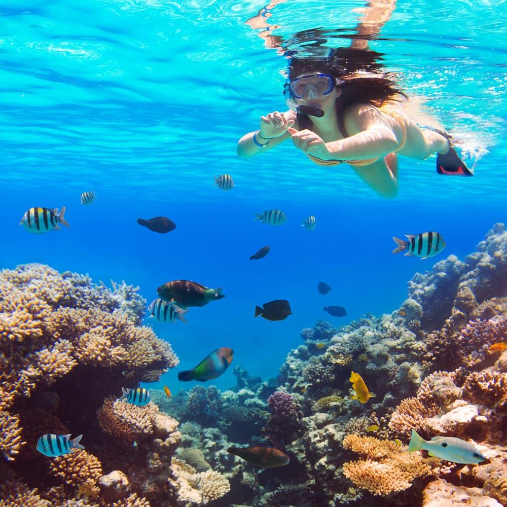 Snorkling - Hurghada i Egypten