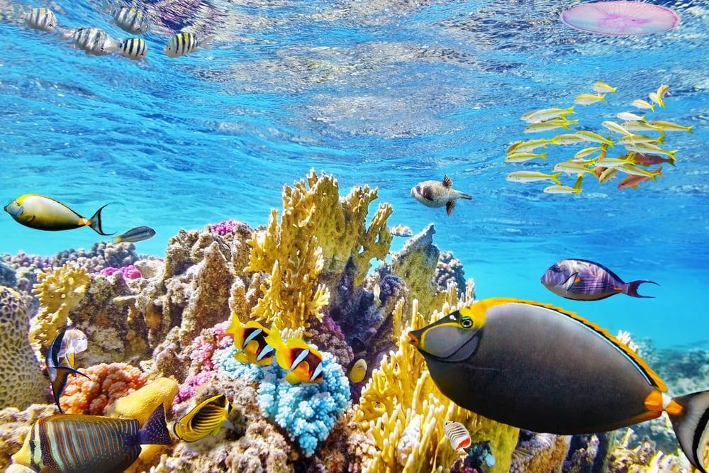 Tropiske fisk - Hurghada i Egypten