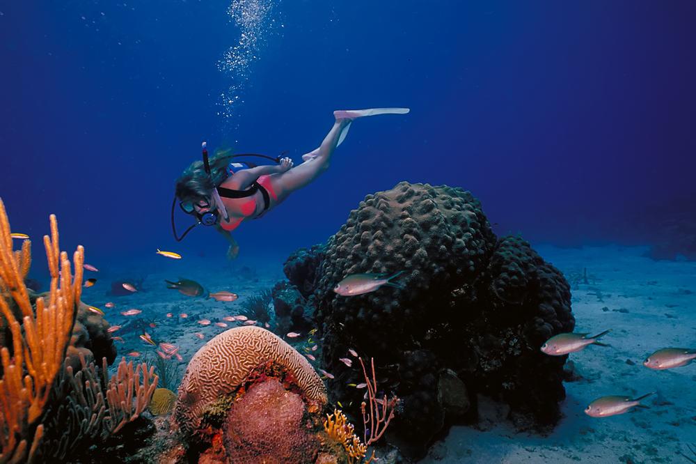 Dykning - Sankt Croix på Jomfruøerne