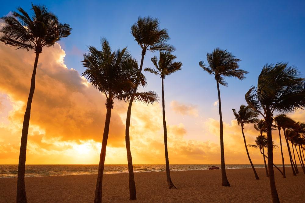 Strand med palmer - Fort Lauderdale i Florida