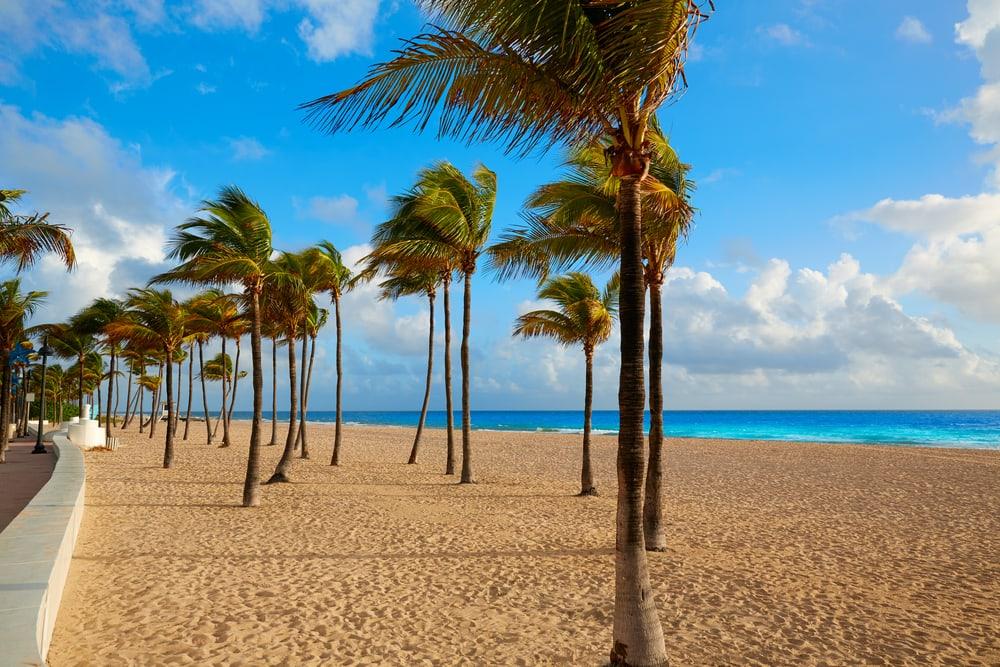 Strand og palmer - Fort Lauderdale i Florida