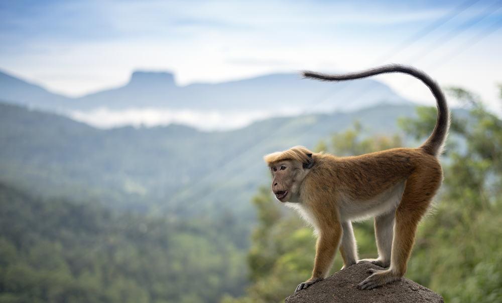 Kadugannawa - Sri Lanka