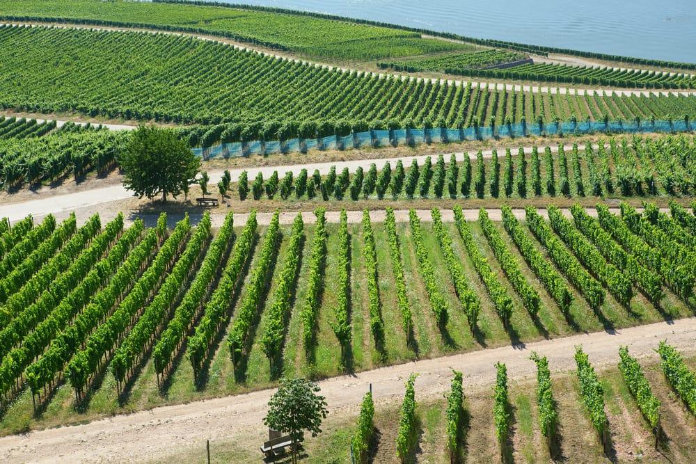 Vinmarker i Rüdesheim am Rhein - Tyskland