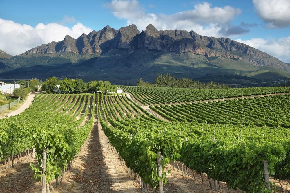 Vinmarker nær Wellington - Sydafrika
