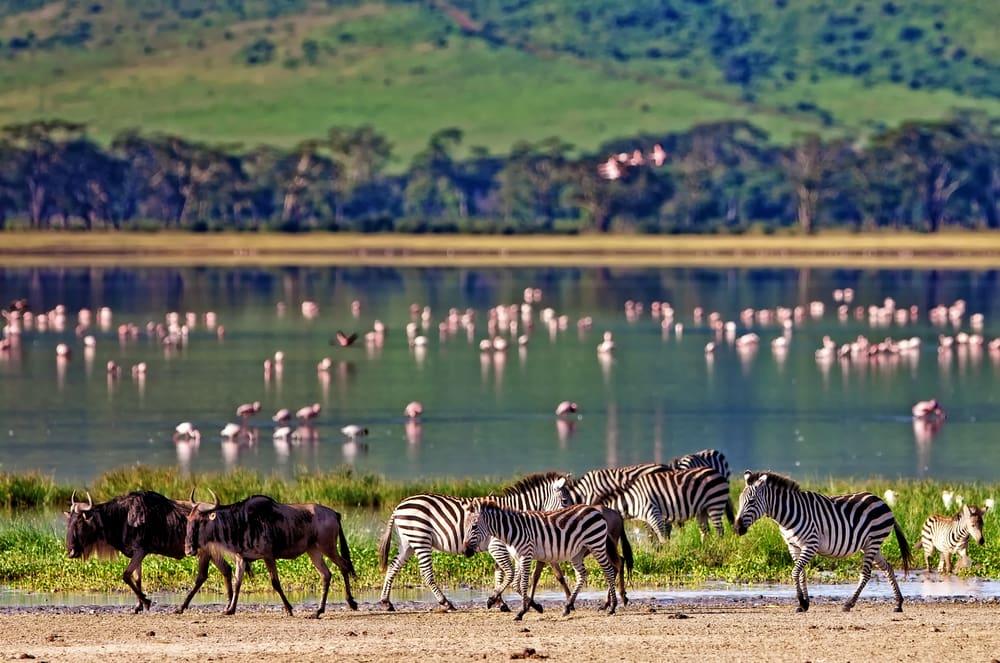 Ngorongoro - Tanzania i Afrika