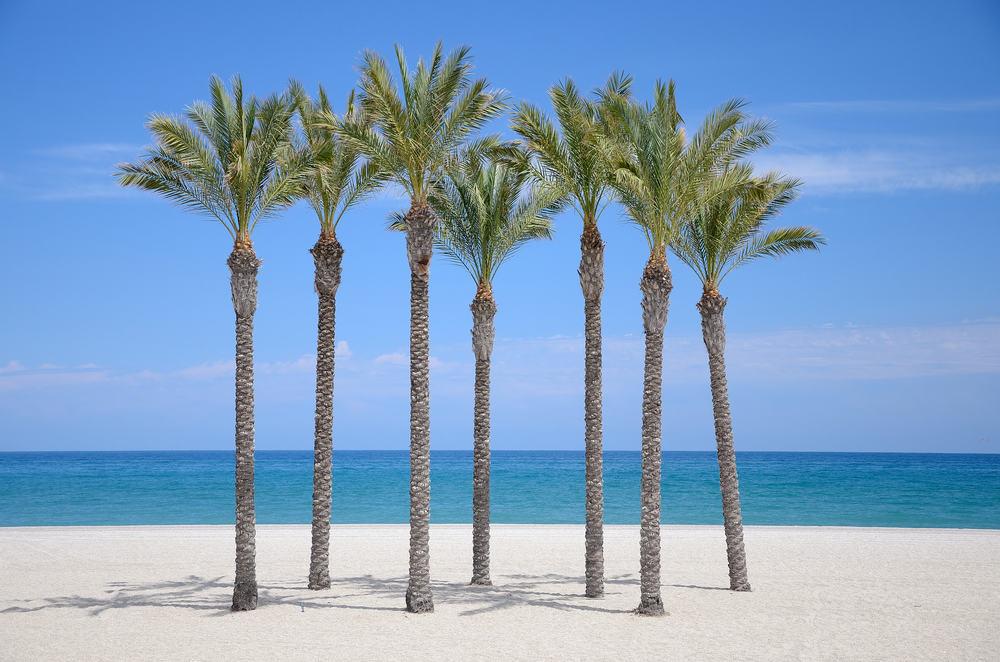 Strand og palmer - Roquetas de Mar i Spanien