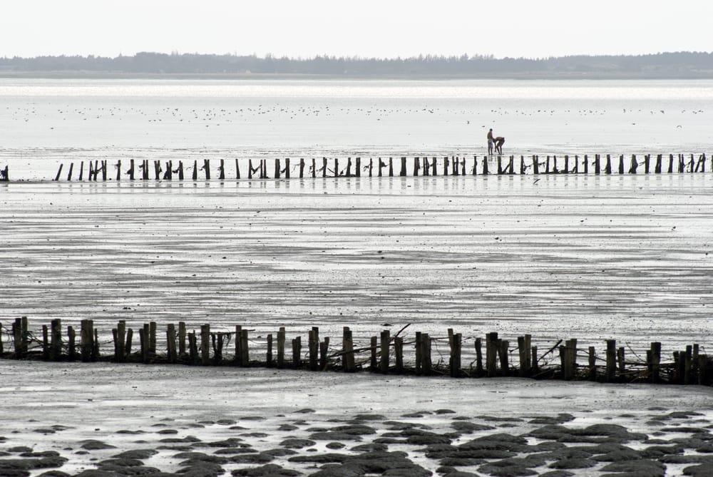 Vadehavet på Rømø
